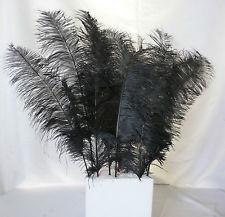 H: Black Feathers m3pPmm2ccKvSY7PbVXi67Dw