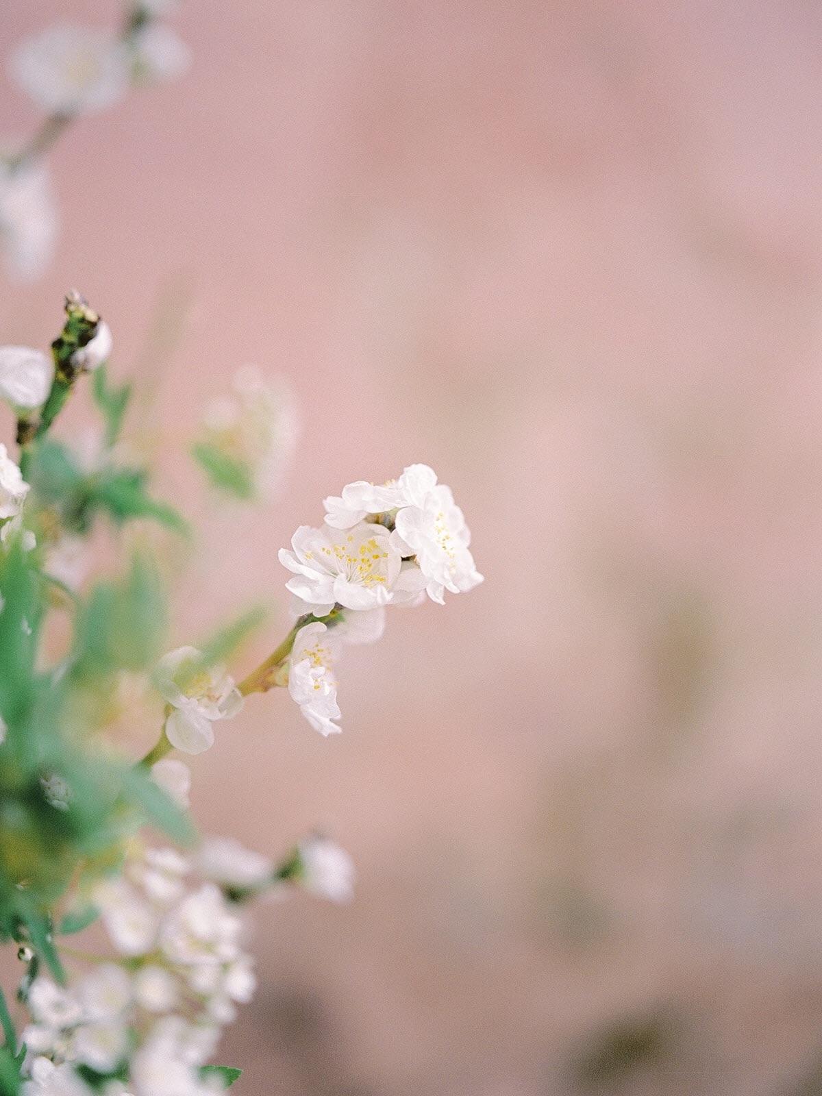 Floresie