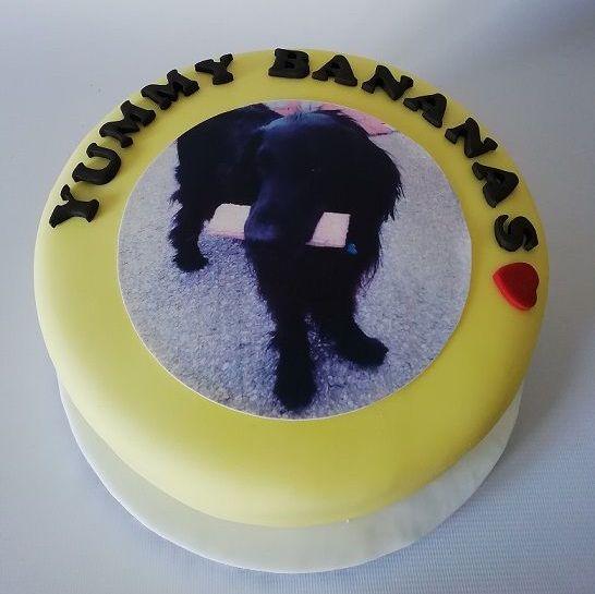 dog cake1