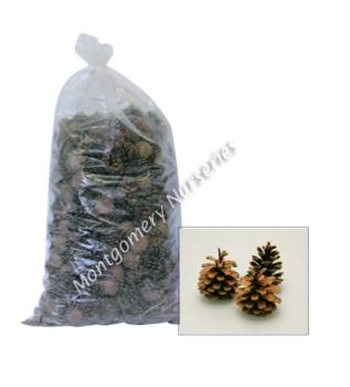 10Kg Bag Austriaca Cones #DF4004
