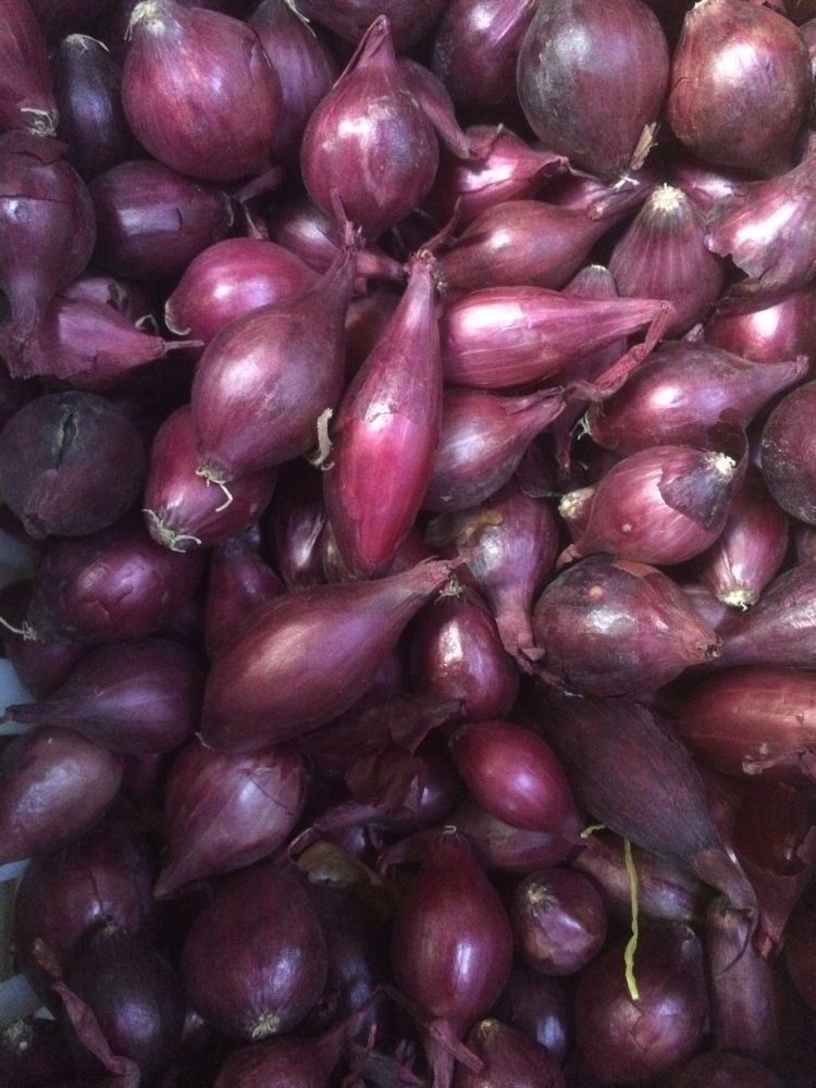 1kg Red Barron Onion Set