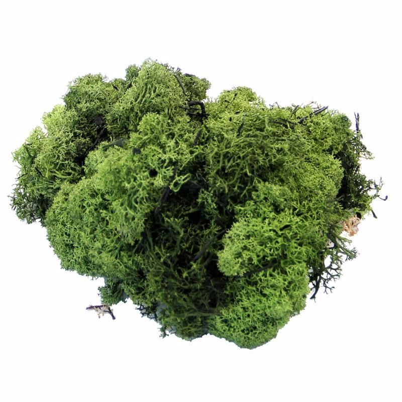 Dark Green Reindeer Moss 500g #DF4003