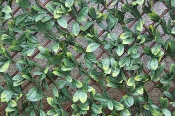 Artificial Laurel Leaf Trellis - 100x200cm #YOJ-828