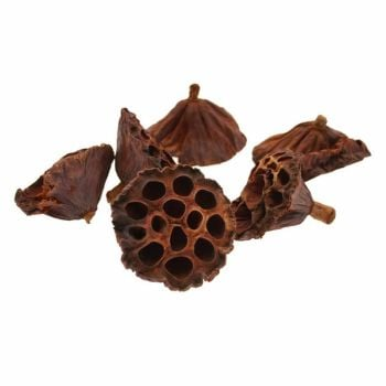 6-8cm Medium Lotus Heads - 50 Pieces #DF4061