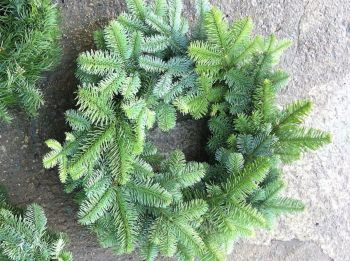 "20-22"" Approx - Hand-tied - Fresh Noble Fir Wreath - Made on a 14"" Straw Ring **PRE-ORDER NOW**"