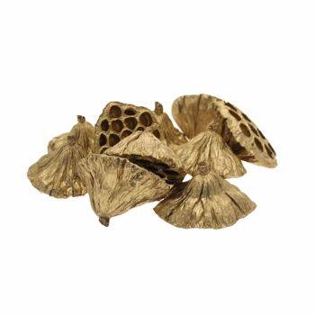 6-8cm Medium Lotus Heads - Gold - 20 Pieces #DF4065
