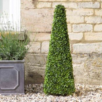 Topiary Tree - Boxwood Obelisk - 90cm #5045040