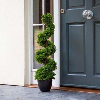 Topiary Twirl - Boxwood - 90cm #5045088