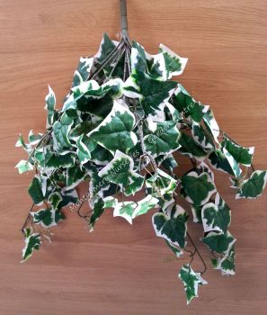 Ivy Trail Variegated 14 Stems #20662