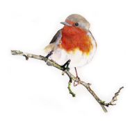 Robin red breast greetings card