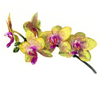 Orchid print greetings card