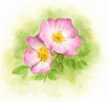 Rosa Canina print greetings card