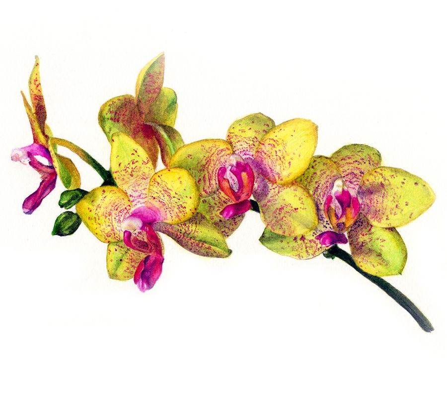 Orchid print - Limited edition