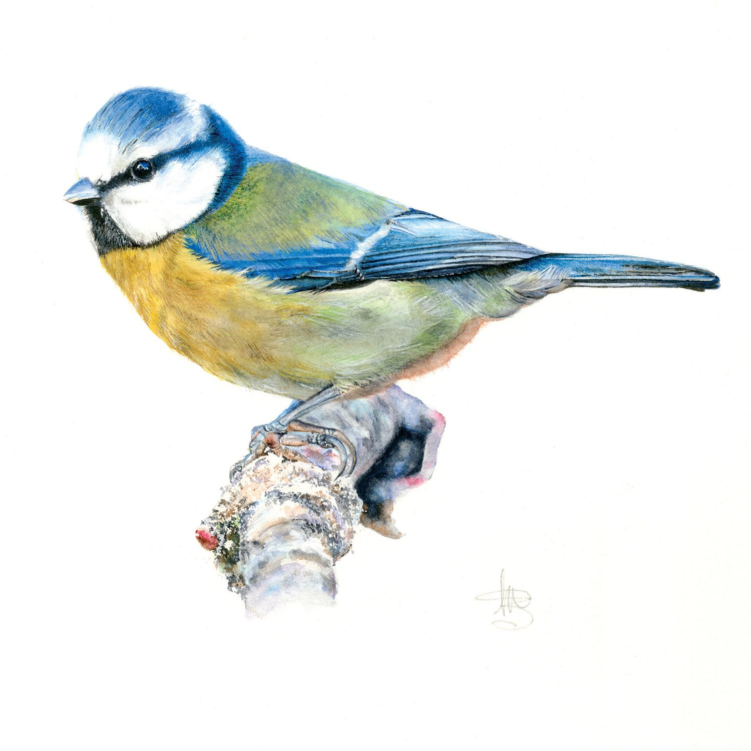 Limited edition blue tit giclee print