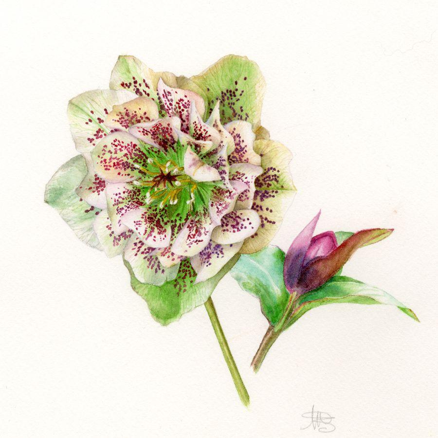 botanical greetings cards