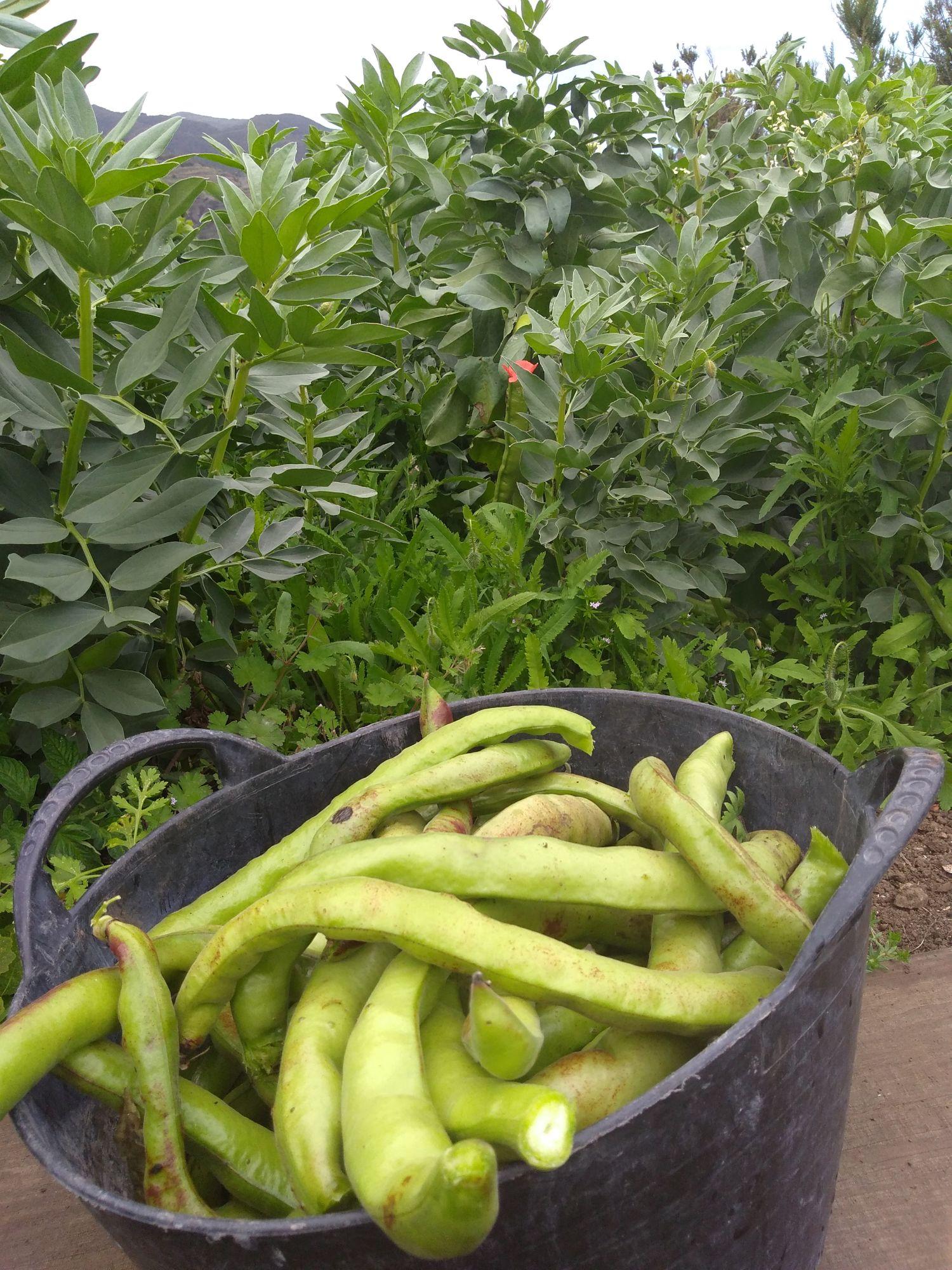 finca franceses veg garden