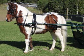 Zilco SL Mini Harness for Minature and Small Shetland Ponies with sliding saddle
