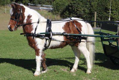 Zilco SL Mini Harness for Minature and Small Shetland Ponies  Zilco SL Mini