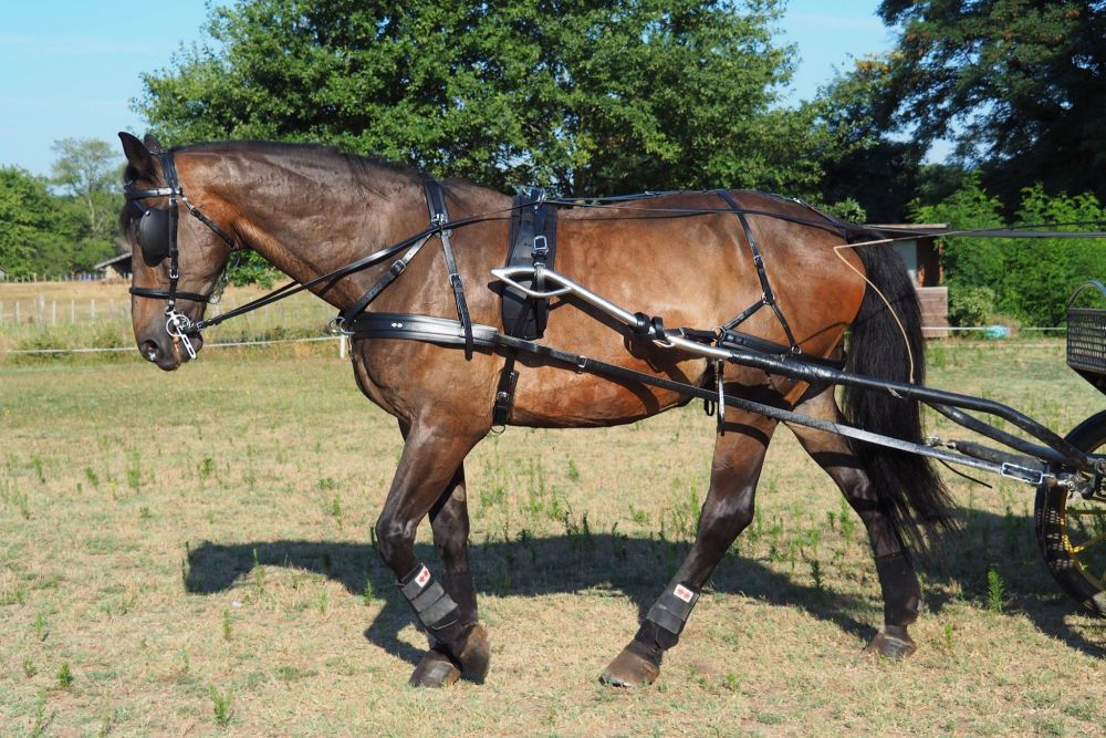 Zilco Sl Plus Spares and Parts pony cob and full s