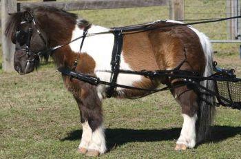 SL Single Harness - Shetland with fixed or sliding saddle