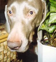 hannah face and plant