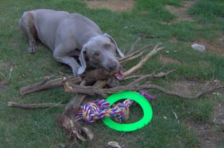 millie with sticks and toys im000293