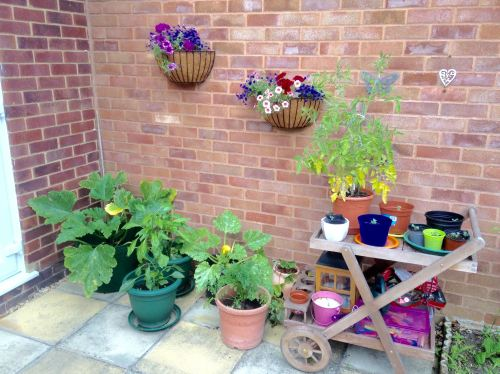 lylia rose garden blog lifestyle grow your own patio containers veg uk