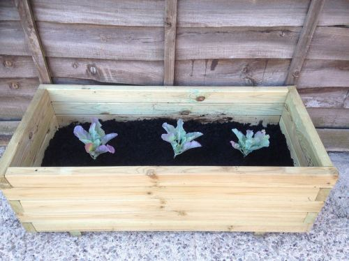 patio container veg grow your own potatoes cauliflower pots - lylia rose bl