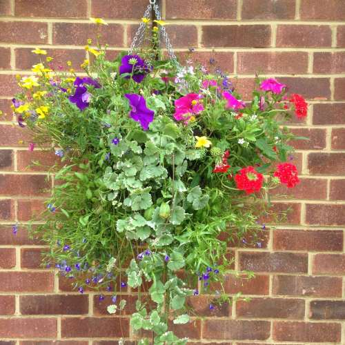 hanging basket garden photo lylia rose lifestyle uk blogger
