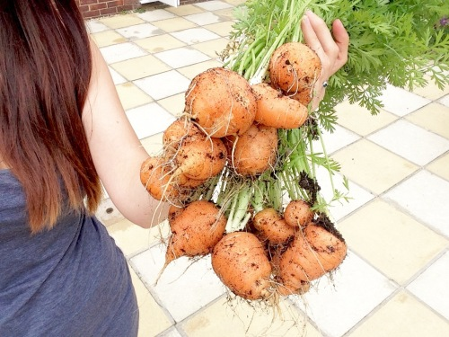 chantenay carrots grow your own container beginner - lylia rose uk lifestyl