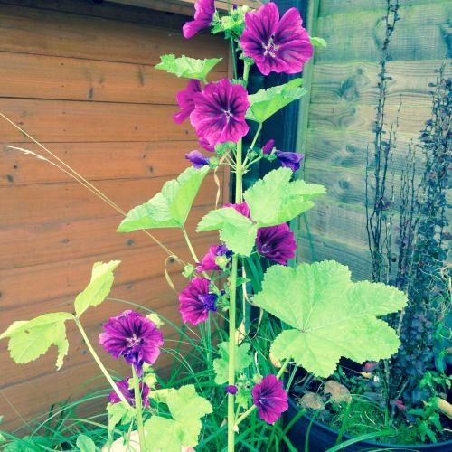 purple wildflowers in a pot - lylia rose uk lifestyle and garden blog post