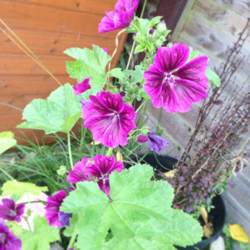 purple wildflowers in a pot - lylia rose uk lifestyle and garden blogger