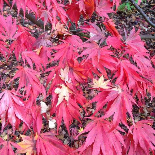westonbirt arboretum october 2015 photos autumn leaves walk blog post (7)