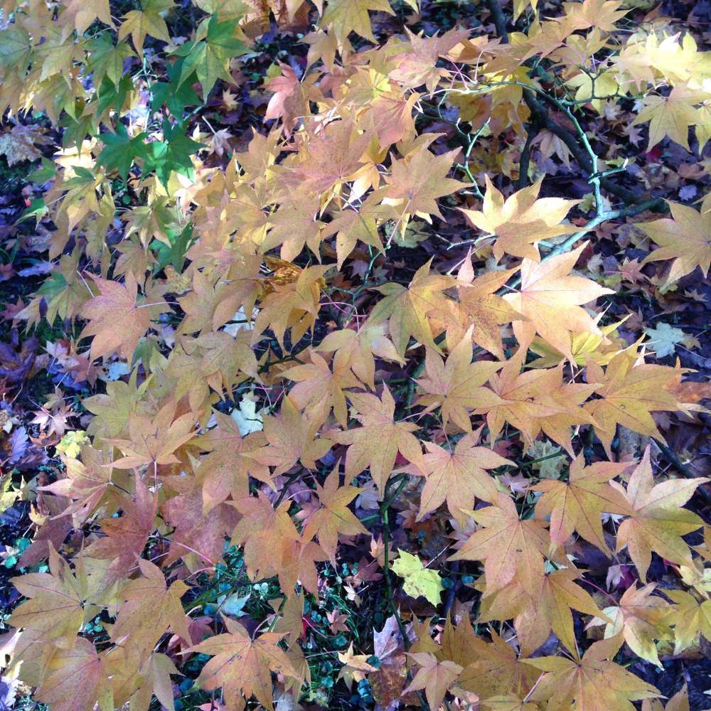 westonbirt arboretum october 2015 photos autumn leaves walk blog post (2)