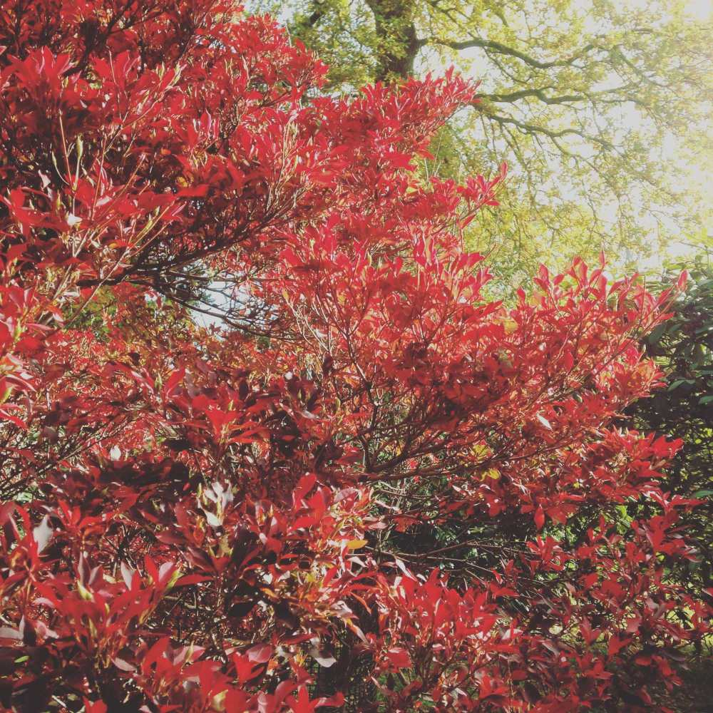 westonbirt arboretum october 2015 photos autumn leaves walk blog post (8)