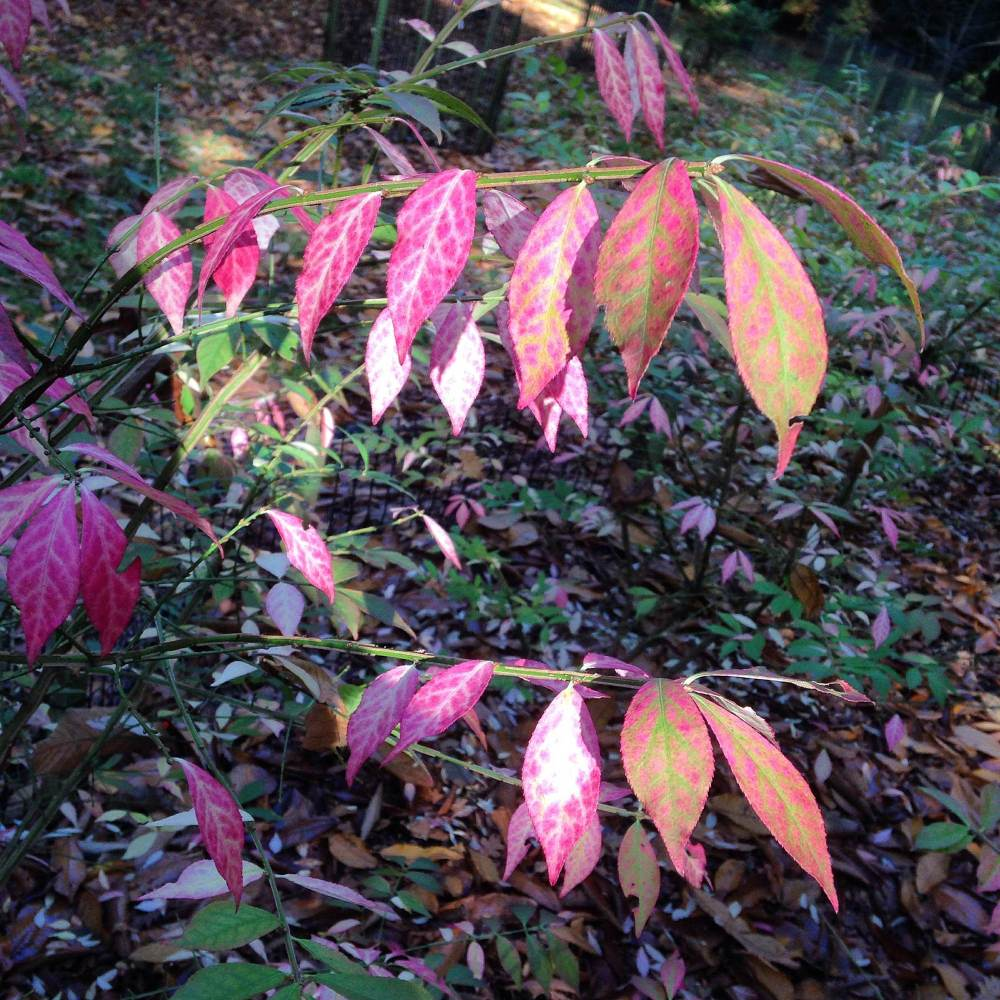 westonbirt arboretum october 2015 photos autumn leaves walk blog post (6)