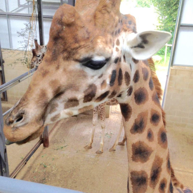 cotswold wildlife park photos june 2015 - lylia rose uk lifestyle blog