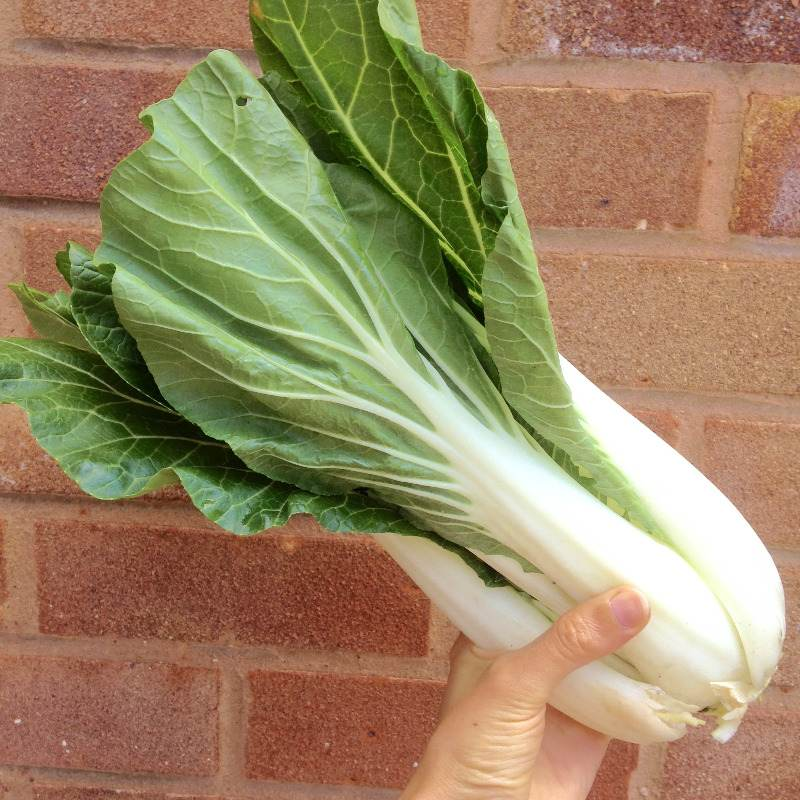 pak choi (bok choy chinese cabbage) photo benefits recipes - lylia rose uk