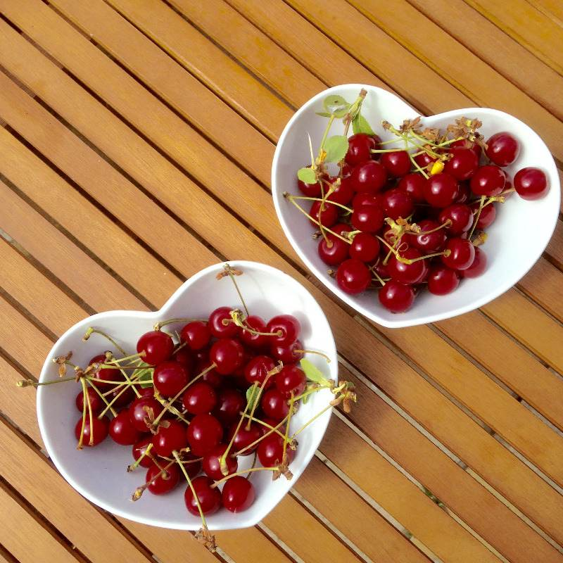 fresh fruit cherries picked from garden tree - lylia rose uk lifestyle blog
