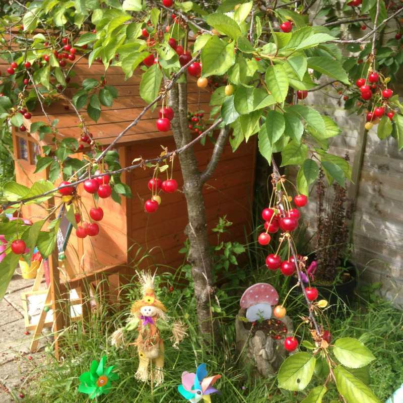 cherry tree garden scarecrow - lylia rose lifestyle blogs uk