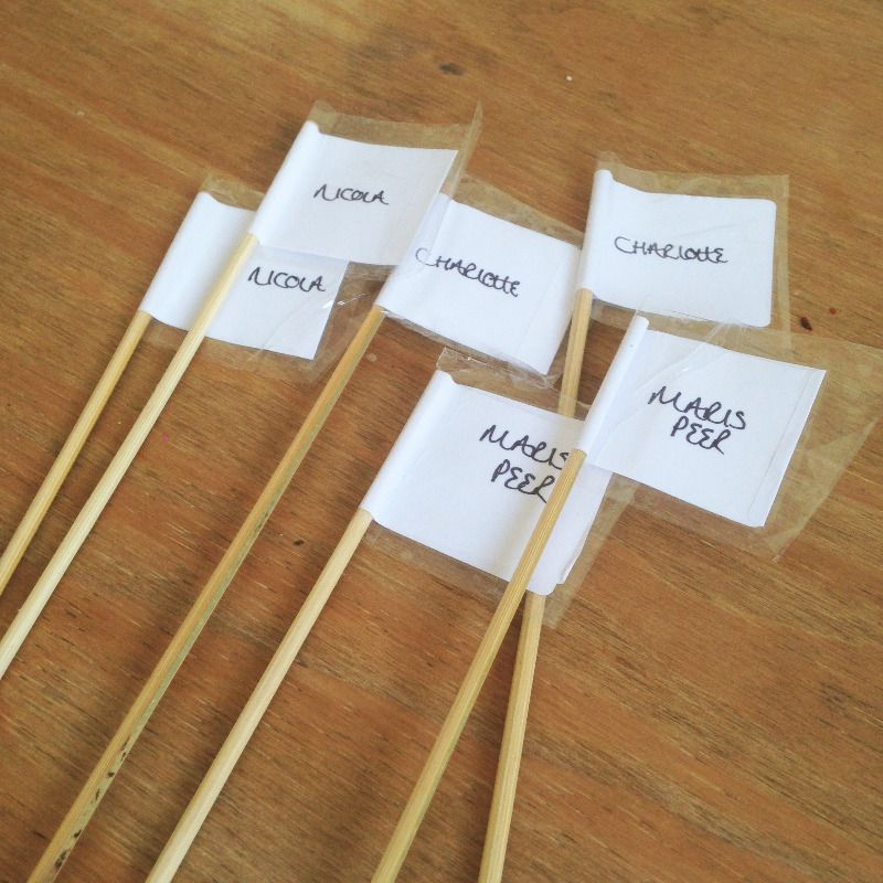 homemade potato plant markers grow your own - lylia rose uk lifestyle &