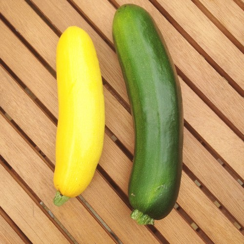 home grown green yellow courgettes patio containers - photo of picked - lyl