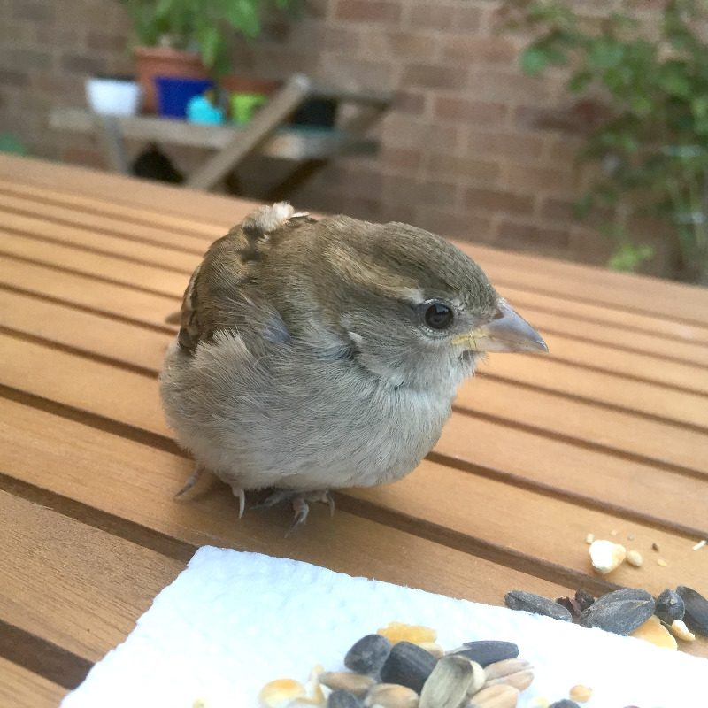 bird flew into window lylia rose lifestyle uk blogger