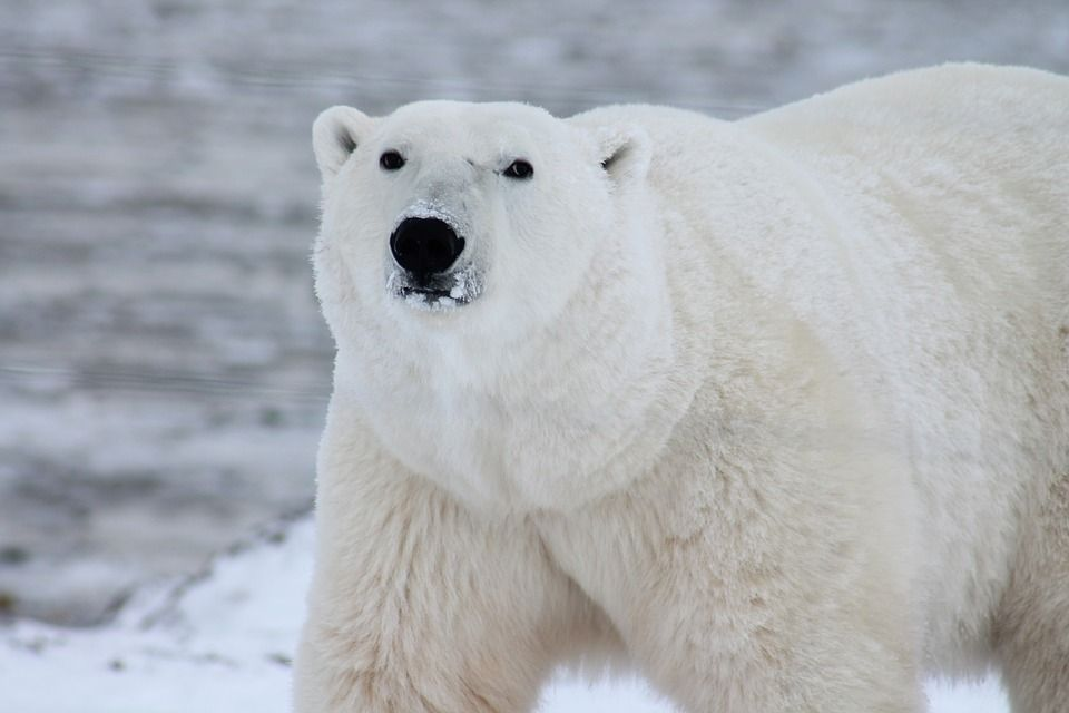 help save the arctic with greenpeace lylia rose blog