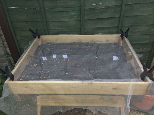 blooma veg trug grow your own patio vegetables lylia rose garden blog