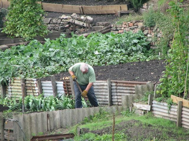 6 Benefits of Allotment Gardening - man in allotments