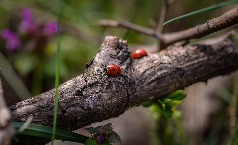 How to encourage wildlife into your garden with children - Creating a creat