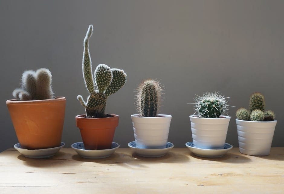 Beautiful Ways to Make a Rental Home Feel Like Your Own plants