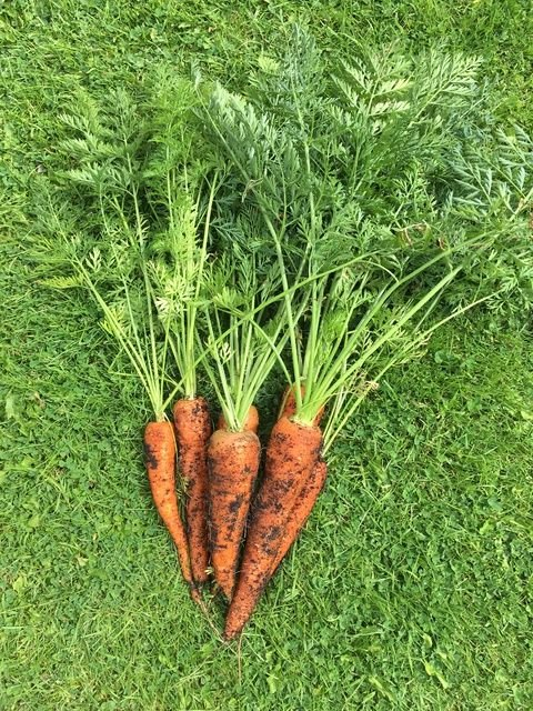 Homegrown Carrots - Monthly Family Roundup - What we got up to in August 20