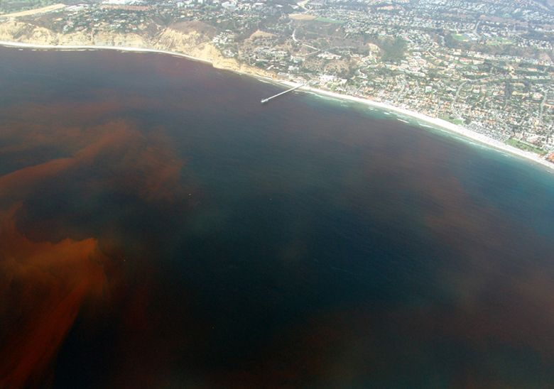 7 Greatest Destinations For Geographical Weirdness - Florida red tide
